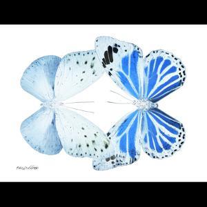 Miss Butterfly Duo Salateuploea Sq - X-Ray B&W Edition by Philippe Hugonnard