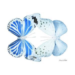Miss Butterfly Duo Salateuploea Sq - X-Ray White Edition by Philippe Hugonnard