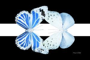 Miss Butterfly Duo Salateuploea - X-Ray B&W Edition II by Philippe Hugonnard
