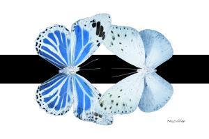Miss Butterfly Duo Salateuploea - X-Ray B&W Edition by Philippe Hugonnard
