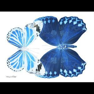 Miss Butterfly Duo Stichatura Sq - X-Ray B&W Edition by Philippe Hugonnard