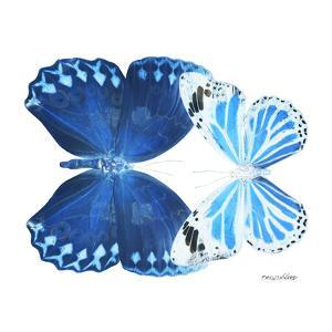 Miss Butterfly Duo Stichatura Sq - X-Ray White Edition by Philippe Hugonnard