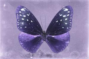 Miss Butterfly Euploea - Purple by Philippe Hugonnard