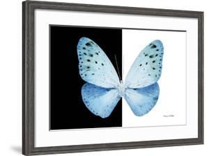Miss Butterfly Euploea - X-Ray B&W Edition by Philippe Hugonnard