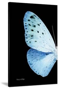 Miss Butterfly Euploea - X-Ray Left Black Edition by Philippe Hugonnard