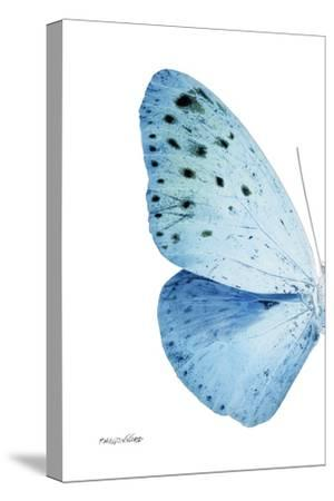 Miss Butterfly Euploea - X-Ray Left White Edition by Philippe Hugonnard