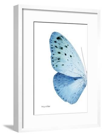 Miss Butterfly Euploea - X-Ray Left White Edition