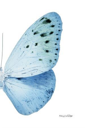 Miss Butterfly Euploea - X-Ray Right White Edition by Philippe Hugonnard