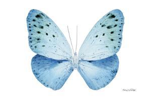 Miss Butterfly Euploea - X-Ray White Edition by Philippe Hugonnard
