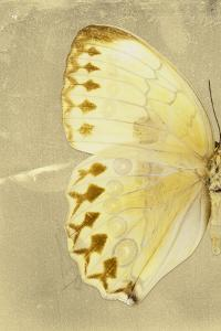 Miss Butterfly Formosana Profil - Yellow by Philippe Hugonnard