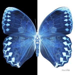 Miss Butterfly Formosana Sq - X-Ray B&W Edition by Philippe Hugonnard
