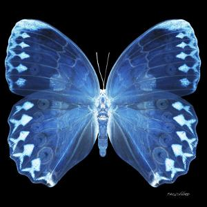 Miss Butterfly Formosana Sq - X-Ray Black Edition by Philippe Hugonnard