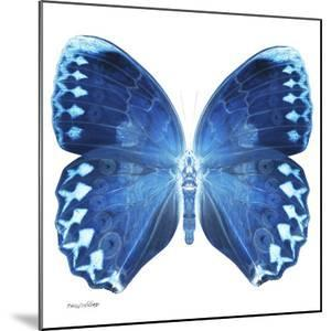 Miss Butterfly Formosana Sq - X-Ray White Edition by Philippe Hugonnard