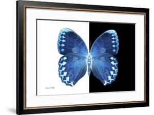 Miss Butterfly Formosana - X-Ray B&W Edition by Philippe Hugonnard