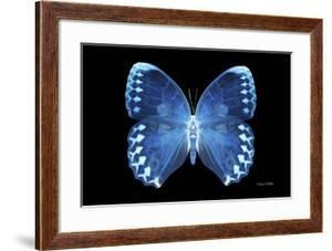 Miss Butterfly Formosana - X-Ray Black Edition by Philippe Hugonnard