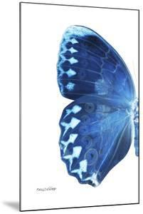 Miss Butterfly Formosana - X-Ray Left White Edition by Philippe Hugonnard