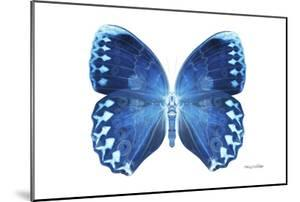 Miss Butterfly Formosana - X-Ray White Edition by Philippe Hugonnard