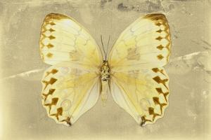 Miss Butterfly Formosana - Yellow by Philippe Hugonnard