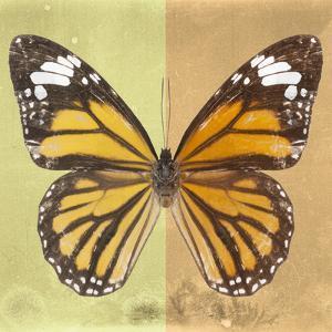 Miss Butterfly Genutia Sq - Yellow & Honey by Philippe Hugonnard