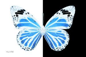 Miss Butterfly Genutia - X-Ray B&W Edition by Philippe Hugonnard