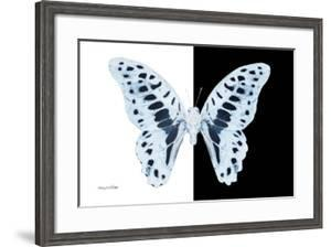 Miss Butterfly Graphium - X-Ray B&W Edition by Philippe Hugonnard