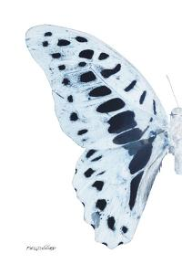 Miss Butterfly Graphium - X-Ray Left White Edition by Philippe Hugonnard