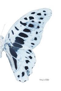Miss Butterfly Graphium - X-Ray Right White Edition by Philippe Hugonnard