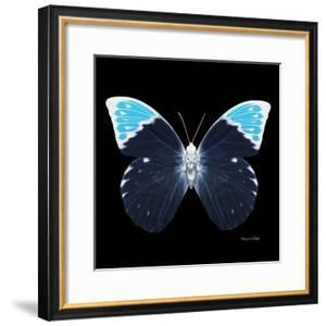Miss Butterfly Hebomoia Sq - X-Ray Black Edition by Philippe Hugonnard