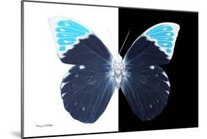 Miss Butterfly Hebomoia - X-Ray B&W Edition by Philippe Hugonnard