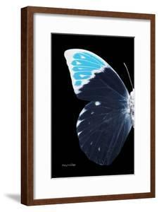 Miss Butterfly Hebomoia - X-Ray Left Black Edition by Philippe Hugonnard