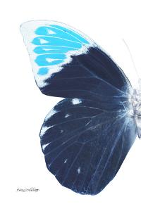 Miss Butterfly Hebomoia - X-Ray Left White Edition by Philippe Hugonnard