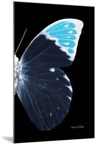 Miss Butterfly Hebomoia - X-Ray Right Black Edition by Philippe Hugonnard