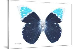 Miss Butterfly Hebomoia - X-Ray White Edition by Philippe Hugonnard