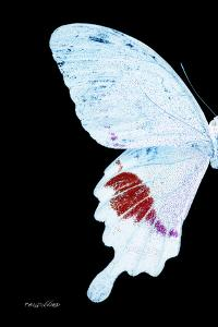 Miss Butterfly Hermosanus - X-Ray Left Black Edition by Philippe Hugonnard