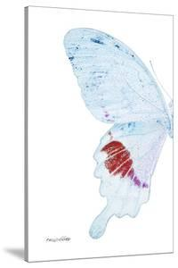 Miss Butterfly Hermosanus - X-Ray Left White Edition by Philippe Hugonnard
