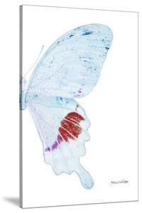Miss Butterfly Hermosanus - X-Ray Right White Edition by Philippe Hugonnard