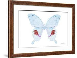 Miss Butterfly Hermosanus - X-Ray White Edition by Philippe Hugonnard
