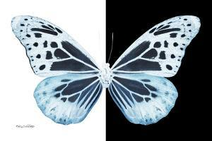 Miss Butterfly Melaneus - X-Ray B&W Edition by Philippe Hugonnard