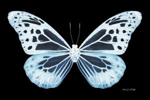 Miss Butterfly Melaneus - X-Ray Black Edition by Philippe Hugonnard