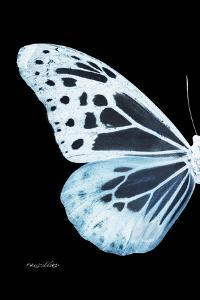 Miss Butterfly Melaneus - X-Ray Left Black Edition by Philippe Hugonnard