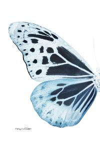 Miss Butterfly Melaneus - X-Ray Left White Edition by Philippe Hugonnard