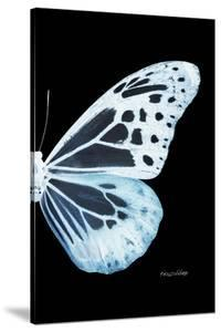 Miss Butterfly Melaneus - X-Ray Right Black Edition by Philippe Hugonnard