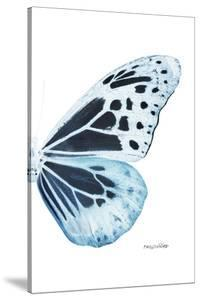 Miss Butterfly Melaneus - X-Ray Right White Edition by Philippe Hugonnard
