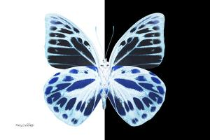 Miss Butterfly Prioneris - X-Ray B&W Edition by Philippe Hugonnard