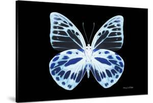 Miss Butterfly Prioneris - X-Ray Black Edition by Philippe Hugonnard