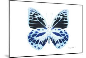 Miss Butterfly Prioneris - X-Ray White Edition by Philippe Hugonnard