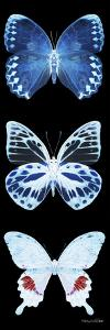 Miss Butterfly X-Ray Black Pano II by Philippe Hugonnard