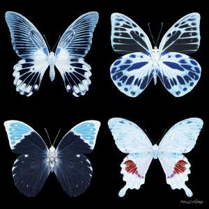 Miss Butterfly X-Ray Black Square II by Philippe Hugonnard