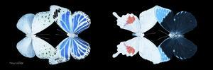 Miss Butterfly X-Ray Duo Black Pano V by Philippe Hugonnard