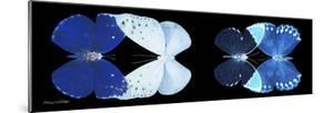 Miss Butterfly X-Ray Duo Black Pano VI by Philippe Hugonnard
